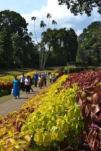 The Royal Botanical Gardens