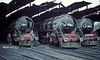 'Eyes Right!'  WP7161, WP7045 and WP 7043 all have their 'nose cones' open to allow acess to the inner smokebox door at Moradabad on 18 February 1992