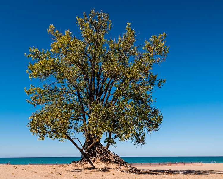 A sunnier day, Warren Dunes State Park