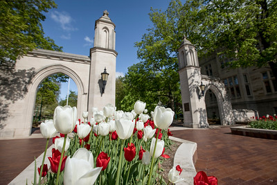 Tulips at the Sample Gates of Indiana University