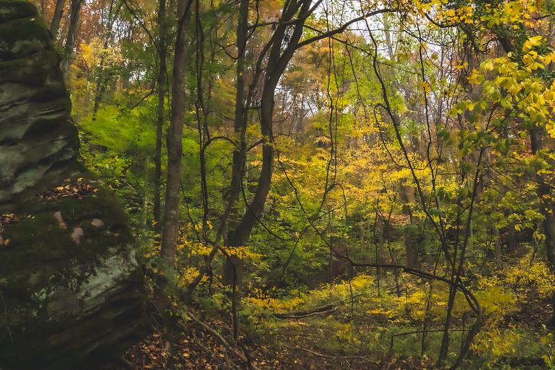 Bluffs of Beaver Bend Nature Preserve in Shoals Indiana