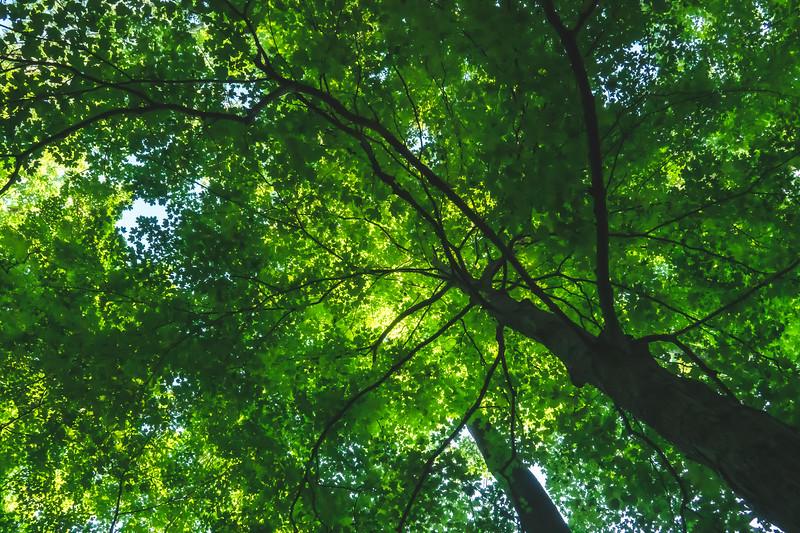 Charlestown State Park in Charlestown Indiana
