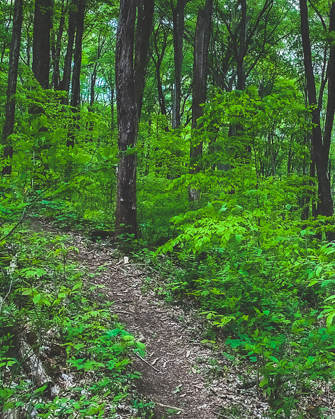 Dilcher-Turner Canyon Forest in Greene County Indiana