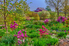 The Stott garden with rhododendron and a red barn near Goshen, Indiana, USA.