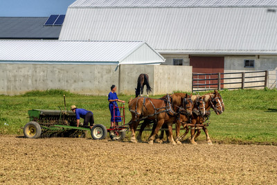 An Amish family works on a farm in Grabill, IN on Thursday, August 13, 2015. Copyright 2015 Jason Barnette
