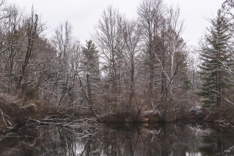 Greene-Sullivan State Forest in Dugger Indiana