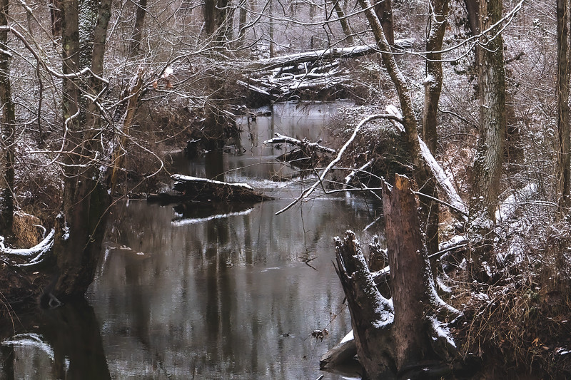Greene-Sullivan State Forest in Dugger Indiana