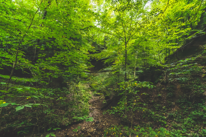Hemlock Cliffs within the Hoosier National Forest near English Indiana