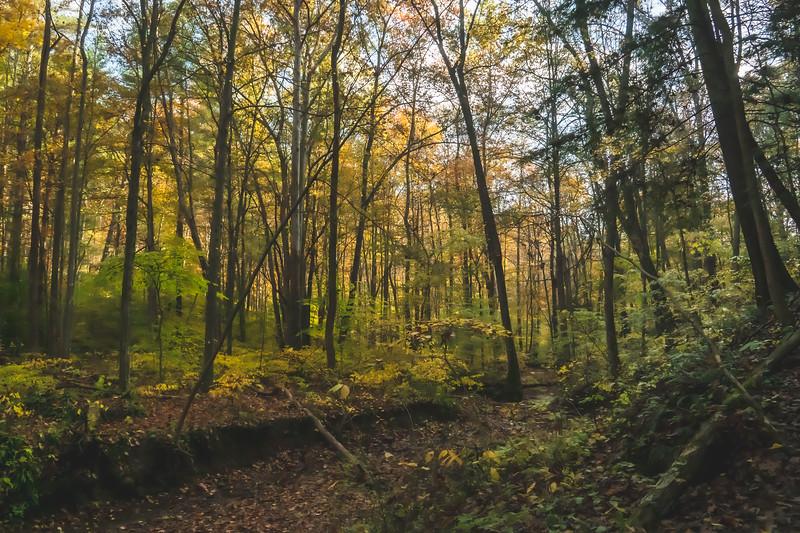 Hemlock Cliffs within Hoosier National Forest near English Indiana