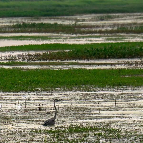 2018 Indiana: Goose Pond Fish & Wildlife Area in Linton and Shakamak State Park in Jasonville Photo Slideshow