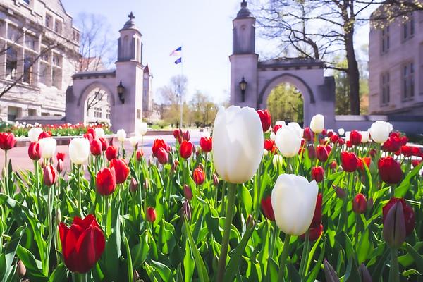 Indiana Colleges & Universities