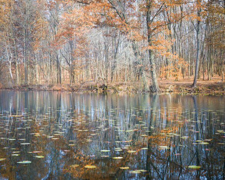 IN 014<br /> <br /> Autumn reflections on the surface of Mill Pond in north central Indiana.