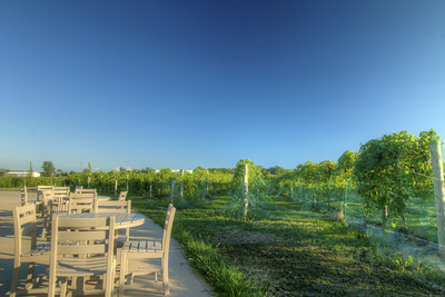 The view of the vineyard from the outdoor patio at Country Heritage Winery & Vineyard in Laotto, IN on Tuesday, August 11, 2015. Copyright 2015 Jason Barnette