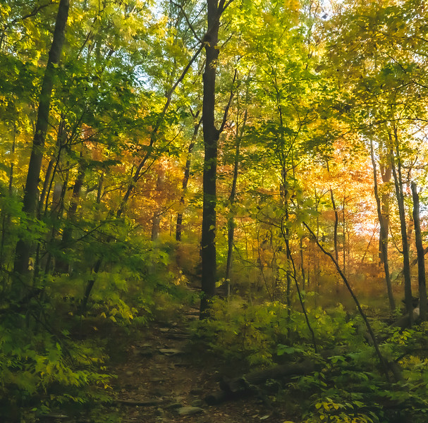 McCormick's Creek State Park in Spencer Indiana