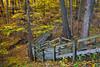Autumn Ravine I