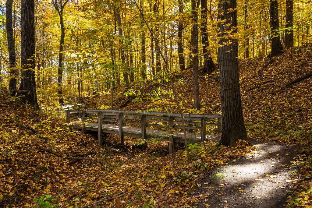 Autumn Ravine III