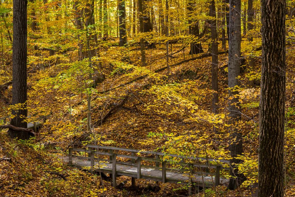Autumn Ravine II