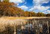 Millers Woods Marsh