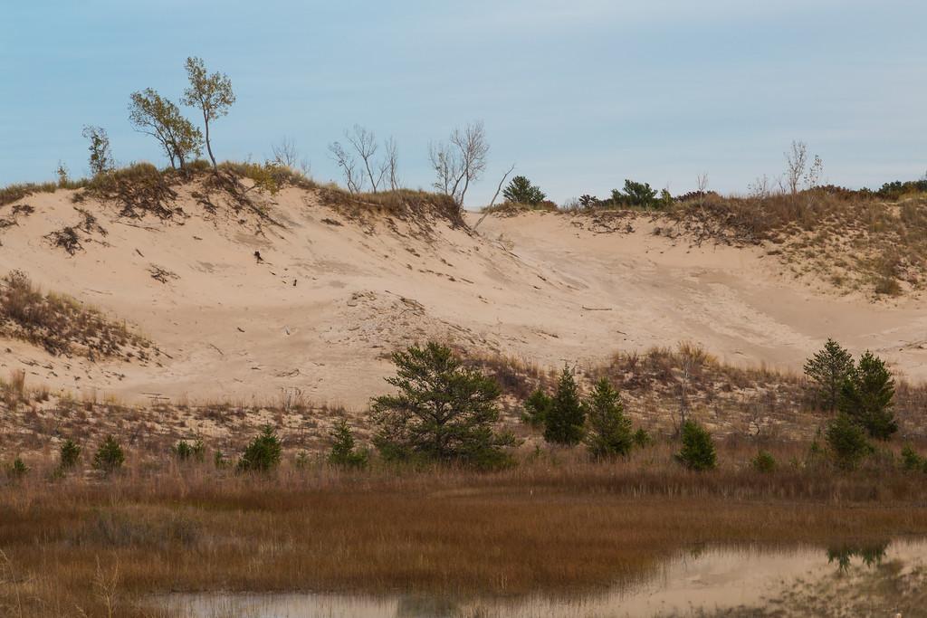 West Beach Dune