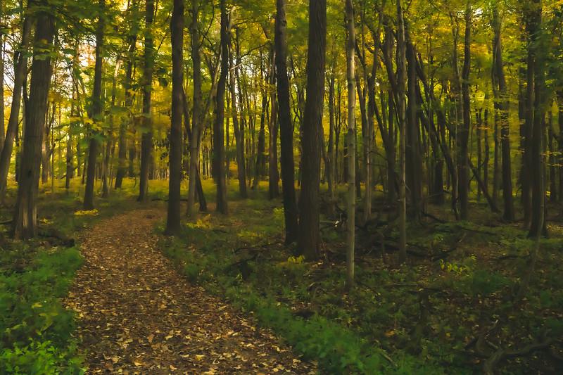 Pine Hills Nature Preserve in Waveland Indiana