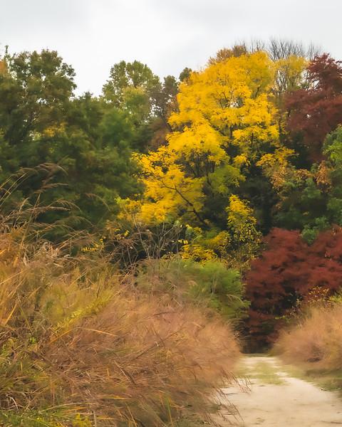 Elliott Woods Nature Preserve in Vigo County Indiana