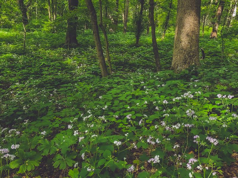 Elliott Woods Nature Preserve within Prairie Creek Park in Vigo County Indiana
