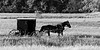 A trip to northern Indiana Amish County provides a glimpse to past times. Standing near a rural road one can hear the clip clop of the horses as a buggy nears. Elkhart County, IN<br /> <br /> IN-100530-0040
