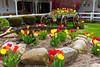 Decorative tulip gardens in Shipshewana, Indiana, USA.