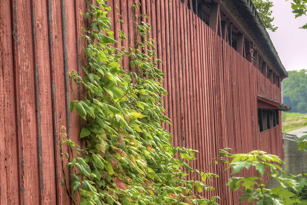 Vines grow on the outside of the Spencerville Covered Bridge in Spencerville, IN on Sunday, August 9, 2015. Copyright 2015 Jason Barnette