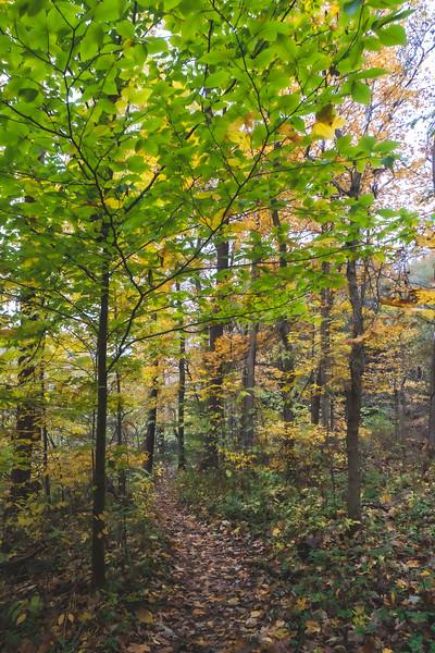 Turkey Run State Park in Marshall Indiana
