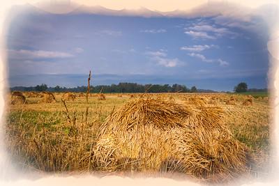 Hoosier Harvest