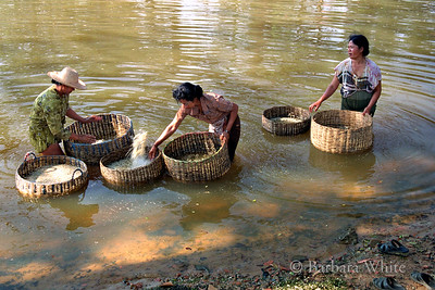 Washing Rice In The River