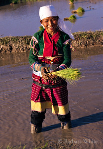 Palaung Woman With Rice