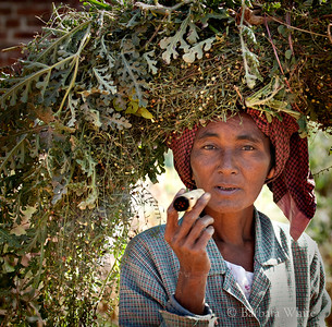 Lady With Cheroot