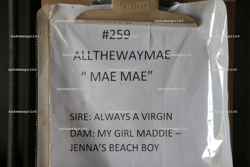 Allthewaymae259-2281