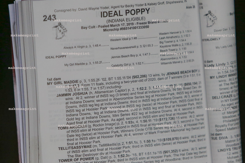 Ideal Poppy-1644