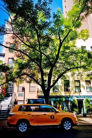 Tree & Cab