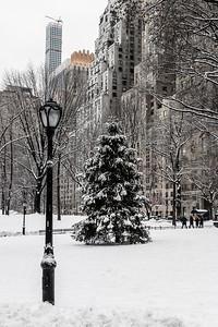 Lampost & Snowy Pine