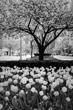 Monotone Spring