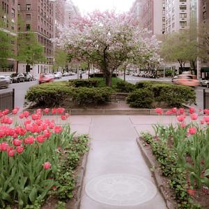 Carnegie Hill Spring