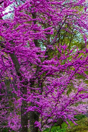 Flowering Purple