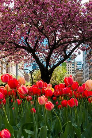 Springtime on Park Avenue
