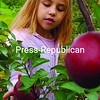 Hailey Baldwin, of Plattsburgh, twists off a McIntosh apple at Rulfs Orchard in Peru. The young apple picker learned about Johnny Appleseed and apple trees at Bailey Avenue School before making the trip down to the local apple orchard to harvest the fruit firsthand.<br><br>(P-R Photo/Rachel Moore)