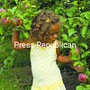 Two-year-old Natalia Gushlaw of Peru seems to be having a tough time choosing which apple to pick at an orchard near her home. It's apple season in the North Country.<br><br>(P-R Photo/Joanne Kennedy)