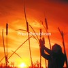 Tammy Tyndall of Morrisonville picks cattails in a meadow near her home at sunset. Tyndall planned to use the cattails for home decorating.<br><br>(P-R Photo/Andrew Wyatt)