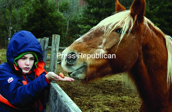 Nickolas Carr-Barcomb feeds Pops, a 25-year-old Belgian draft horse who was rescued from abuse.<br><br>(Staff Photos/Alvin Reiner)