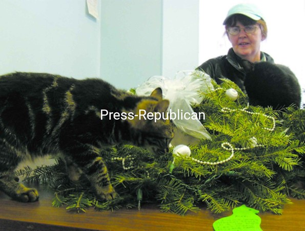 Volunteer Donna Bailey looks on as Kylie the cat closely inspects one of the holiday wreaths being sold to benefit the North Country Animal Shelter and Sweetie's Cat Closet in Malone.<br><br>(Staff Photo/Denise A. Raymo)