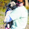 Diane Elis, originally from Beekmantown, cuddles one of the rescued pugs. She got her first pug from a mall and her second from a breeder. Her most recent pug, Gemma, was one of two puppies fostered locally by Mary Kalvaitis at Phantom Farm Pet Motel in Chazy.<br><br>(Staff Photo/Kelli Catana)