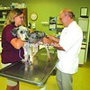 Kennell Assistant Kristin Dominic (left) and Dr. George Palmer examine Fonzie, a terrier mix, at Palmer Veterinary Clinic on Route 22 in Beekmantown. Palmer wears two hats, attending livestock at area farms as well as small animals and pets at his practice. Most new veterinary school graduates these days are going into the traditional small-animal and pet business. <br><br>( P-R Photo/Bruce Rowland)