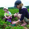 Jay resident Lillian Tulleruss, 4, and her mother, Veronica Uss, pick strawberries at Pray's Family Farms in Keeseville Sunday morning. The strawberry patch opened to the public June 14, which is the second earliest date in the 25 years Darcy Pray could recall, thanks to moderate temperatures and no late killing frost.<br><br>(P-R Photos/Gabe Dickens)